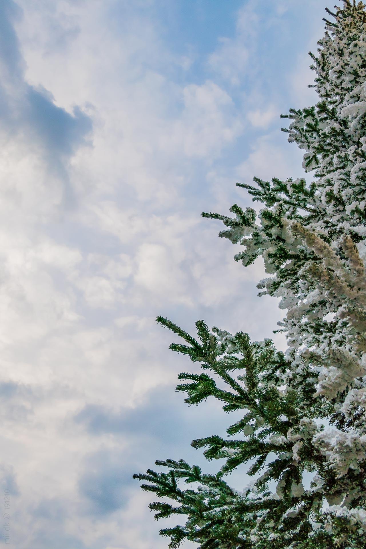 Juletræ dækket af sne med en blå himmel i baggrunden.