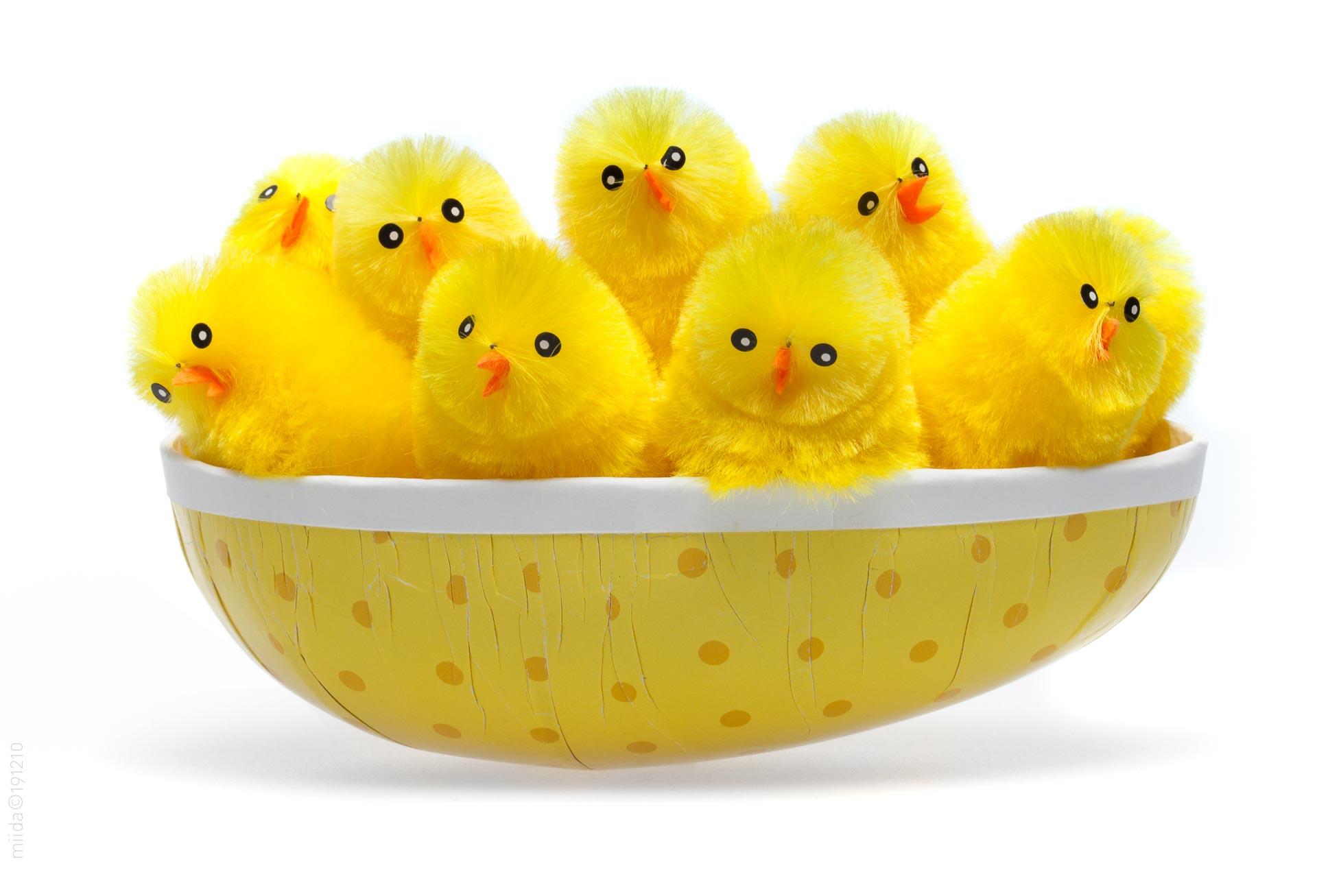 En flok påskekyllinger samlet i et påskeæg.